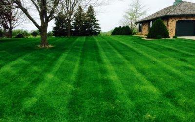Basics Of Lawn Aeration