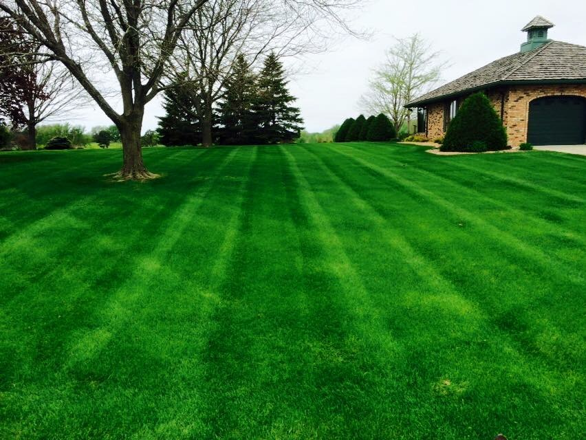Basics of Lawn Aeration
