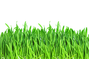 TIPS FOR AUSTIN LAWN CARE SERVICES