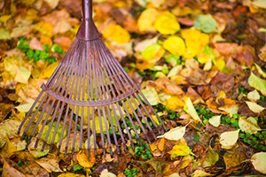 PREPARE YOUR LAWN FOR WINTER WITH FALL SEASONAL CLEANUP