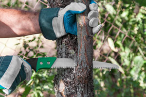 Tips For Tree & Shrub Pruning